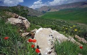 kurdistan flowers